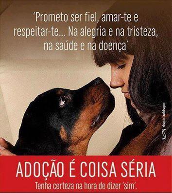 Adotar um Animal tem de bom, mas requer Responsabilidade... e muito Amor!