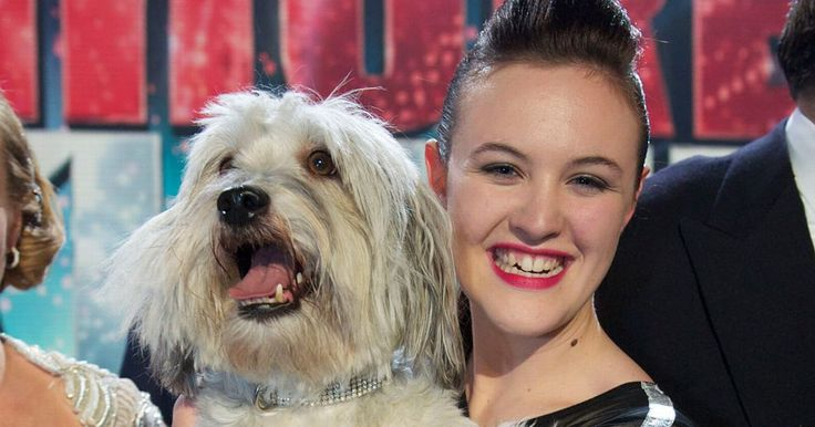 Pudsey and his owner were the winners of the show's 2012 series - and they had quite the journey together