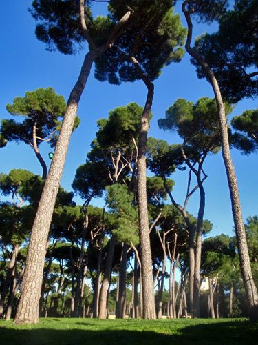 Borghese Garden, Roma.  I can't believe I've been somewhere this beautiful.
