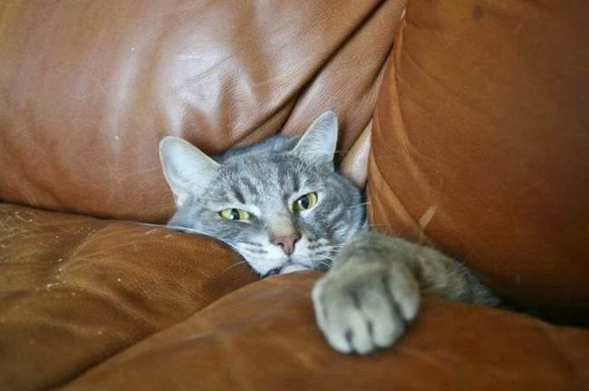 Sofa Cat  18 Hilarious Trapped Cats Who Need Human Help Right Now • Page 3 of 5 • BoredBug