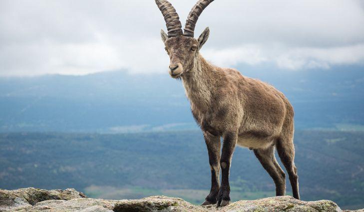 Pin by Febargo on España Rare species of animals