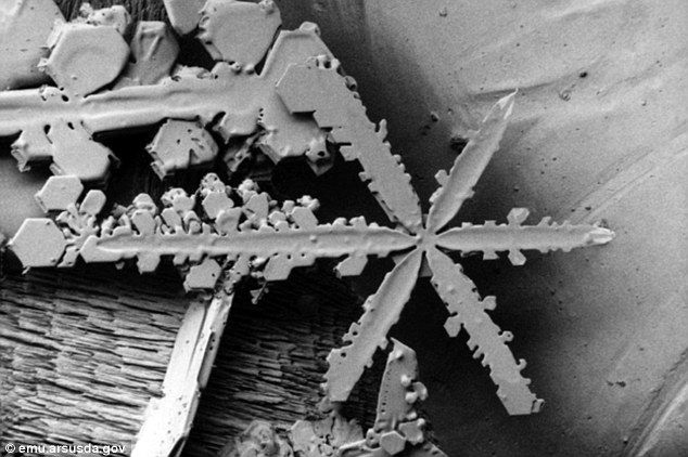 Stunning images of snowflakes under a (frozen) microscope [20 pictures] - 22 Words