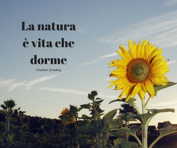 Quote by Friedrich Schelling #quotes #quote #aforismi #nature #natura #flowers #citazioni #naturequotes  #FriedrichSchelling