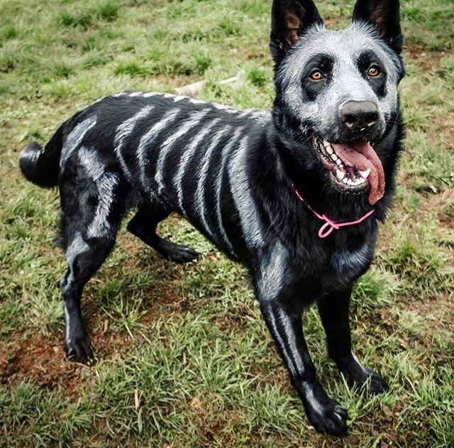SkeleDog halowen Halloween para perros, Disfraz para
