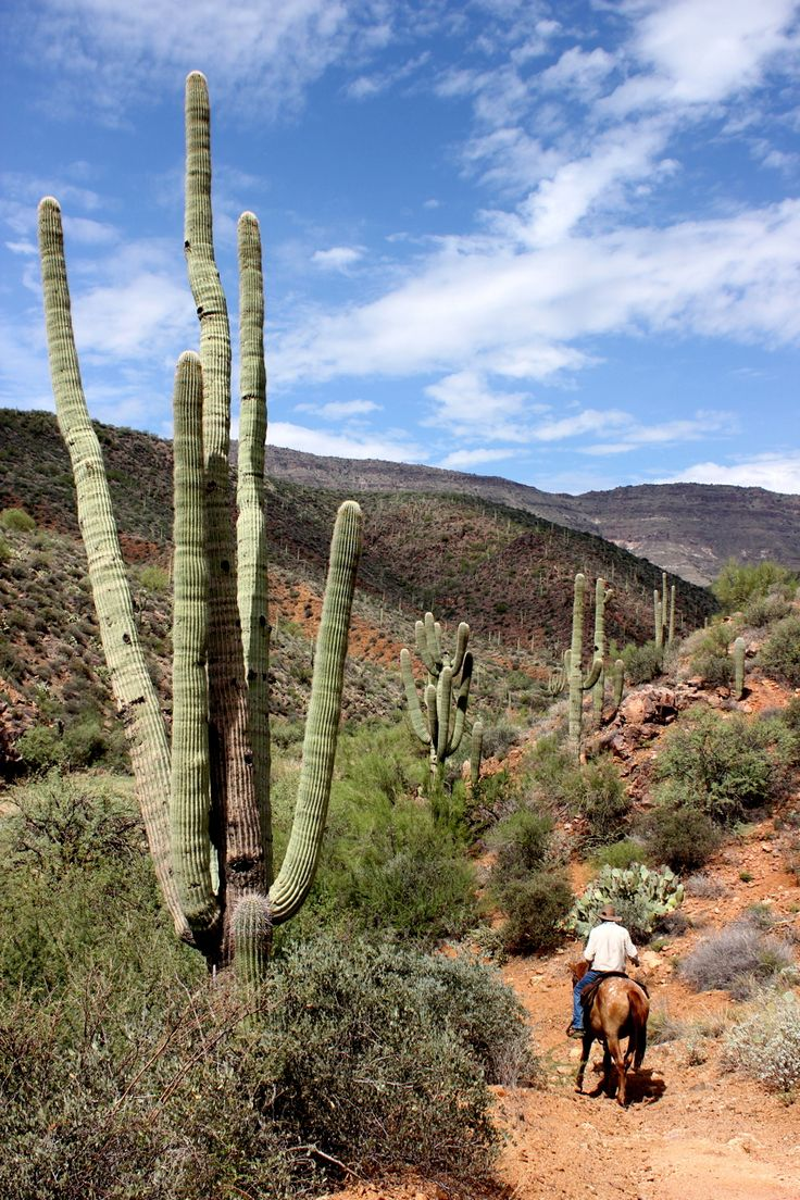 outdoorarizona:  Spur Cross Ranch Conservation Area