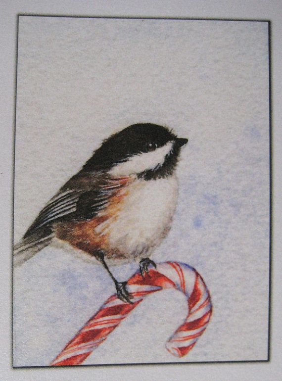 55 Best Chickadees Images On Pinterest Watercolors