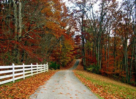 Ashland, KYAshland Ky, Drive Way, Fall Leaves, Country Roads, Beautiful Fall, Dreams House, Driveways, Autumn Beautiful, Country Lane