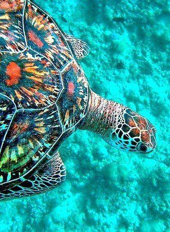 Incredible colors !  http://menentk.tumblr.com/post/119497338126