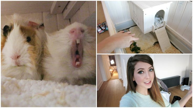 Guinea Pig House Tour & Getting Organised