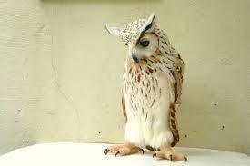 needle felt owl - Recherche Google
