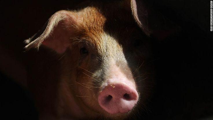 La OMS recomienda una convención de nombres que huir de nombres específicos de animales, como & quot;. La gripe porcina & quot;