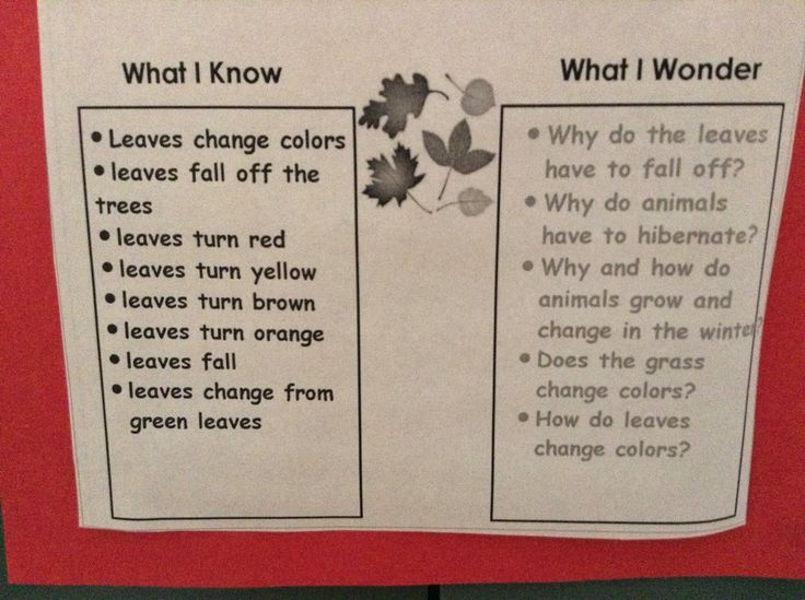 """Our Room 202 Scientists have investigated the drivingquestion """"Why do some leaves change colors in the fall?"""" for over two weeks. It allst..."""