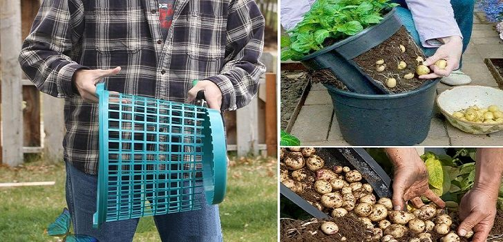 coltivare-patate-cestino-2
