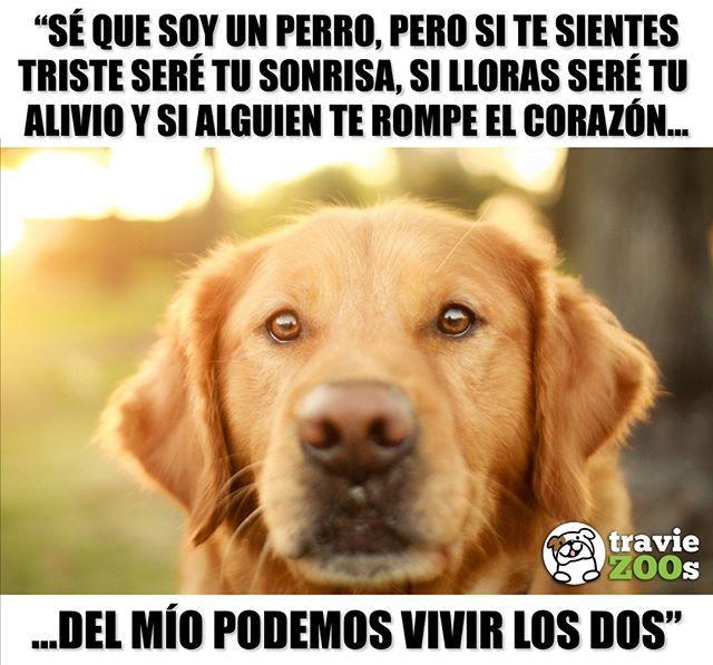 Su Corazon Es Tan Grande Que Te Regala Un Cachito Dogs Perros Heart Corazon Amor Perros Frases Perros Tristes Perros Graciosos