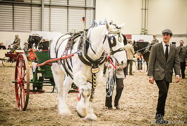 Shire Horse Society Spring Show 2013   Flickr - Photo Sharing!