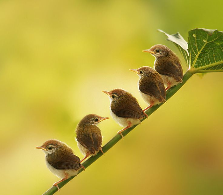 I love this delightful photo of all the little birds lined up waiting for Mama to come home with dinner.