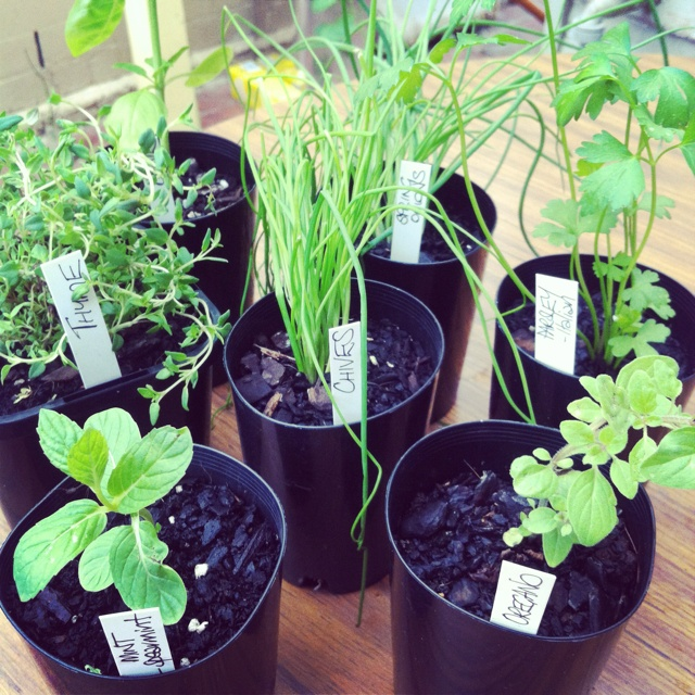 Starting my herb garden!! Locally sourced from the Yarraville farmer's market, Victoria, Australia.