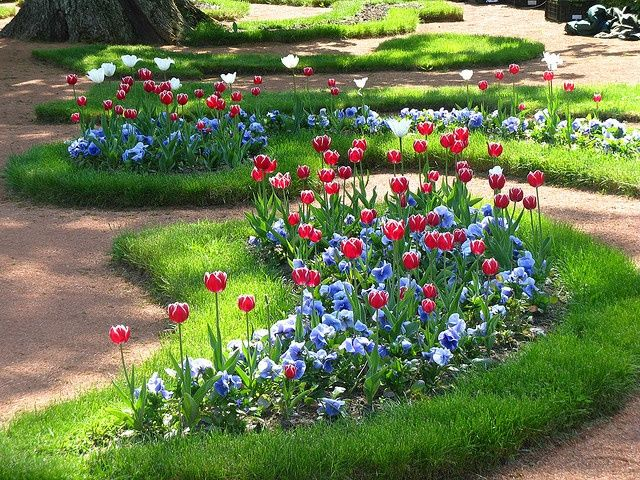 Image Result For Tulip Pansy Combinations For Pots 庭用ゲート 庭 パンジー