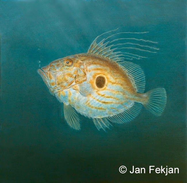 Jan Fekjan: St. Petersfisk