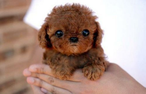 Eeee!  HAHAHA now that i look at it more...kinda reminds me of a baby wookie!! AWWWWWWWWWWW