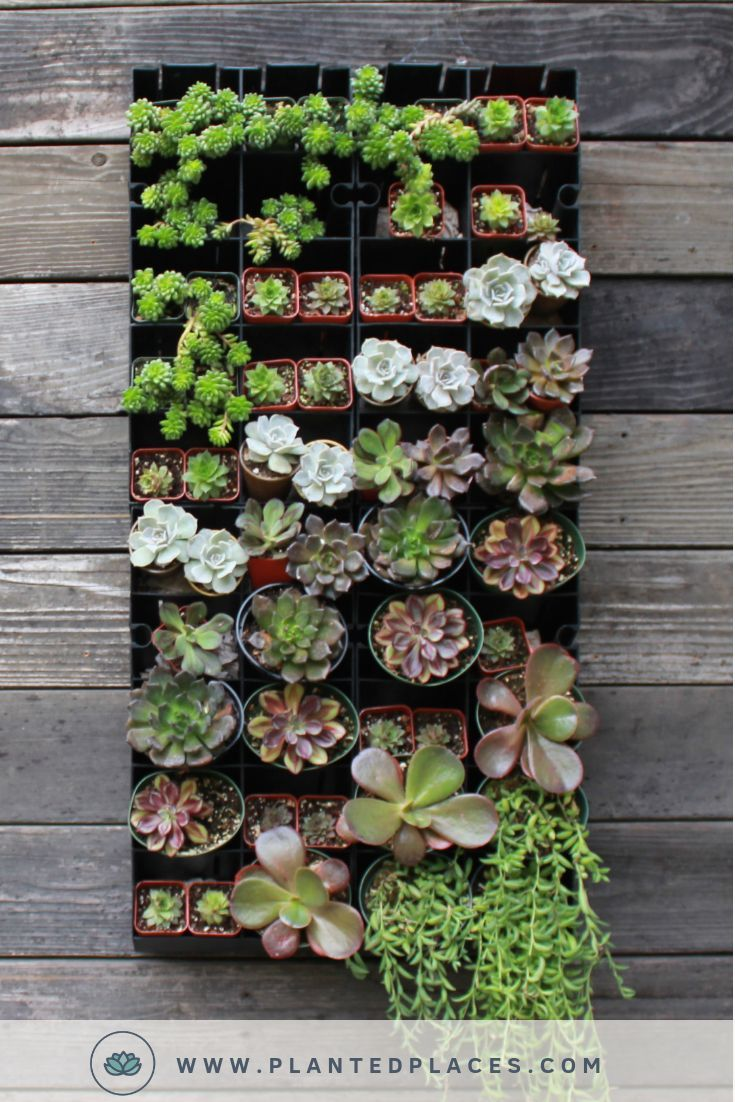 Succulent Living Wall Planter Kit 118 Your Wife Doesn T Have To Have A Green Thumb To Keep This Stunning Displ Garden Gifts Succulents Living Wall Planter