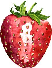 watercolor drawing strawberry vector art illustration