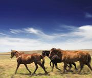 The Humane Society of the United States Witnesses Continued Problems at Wild Horse Gather
