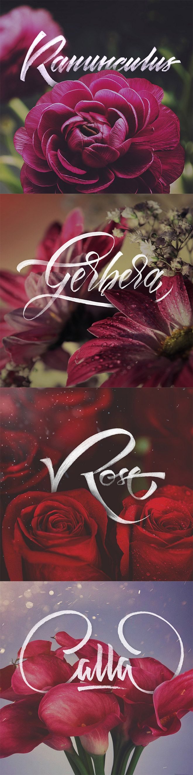 Just Flowers & Letters by Levchenko Calligraphy