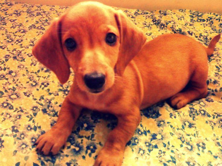 hotdog ;p: Fuzzy Animal