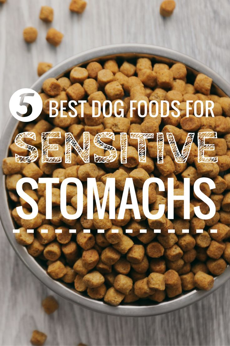 9 best dog foods for dogs with sensitive stomachs 2020