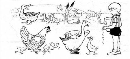 """домашние птицы и их птенцы"""" скачать и распечатать бесплатно"""