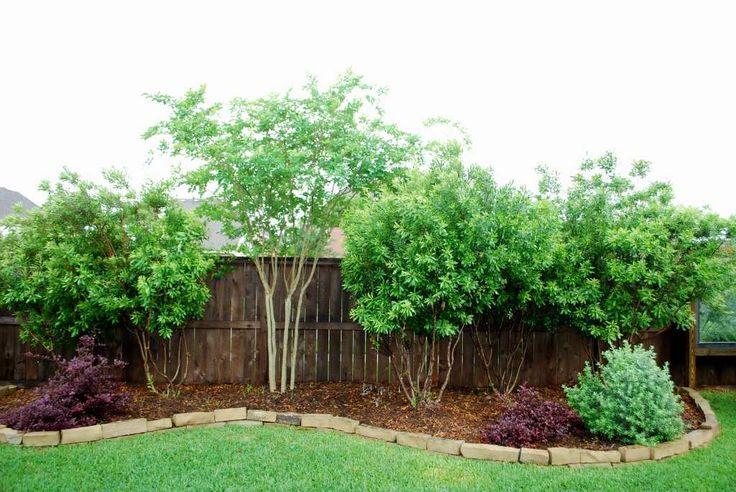 tall shrubs landscaping