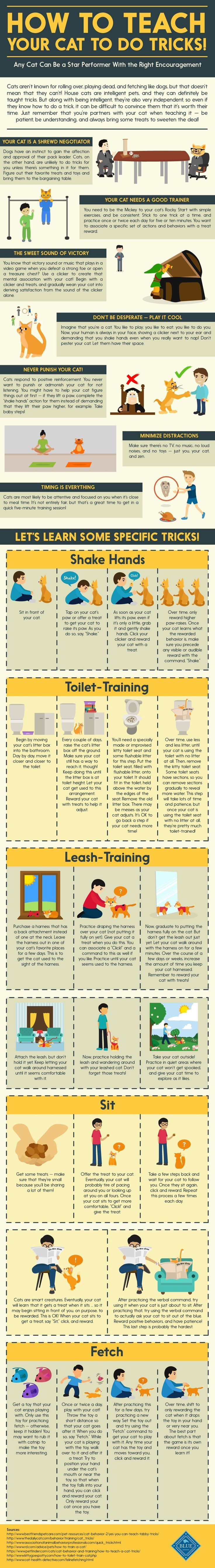 How to Teach Your Cat to do Tricks Infographic Order an oil painting of your pet today at petsinportrait.com