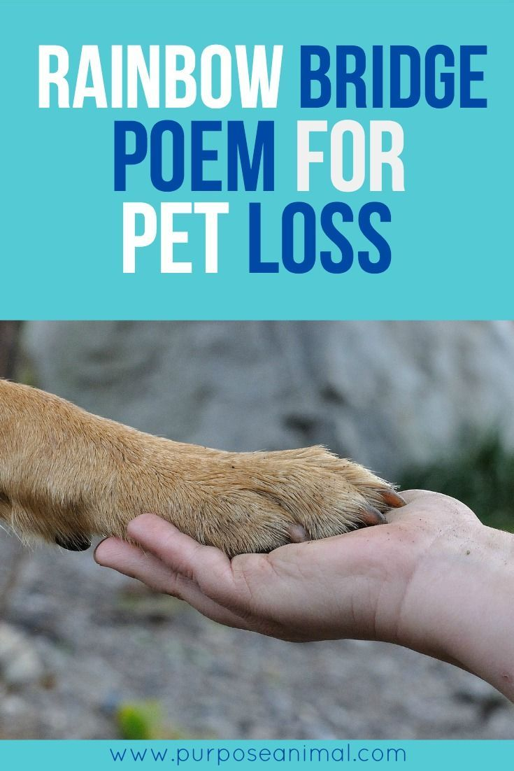Rainbow Bridge Poem For Pet Loss: For those that have lost a much loved pet - I hope you find comfort in this poem..
