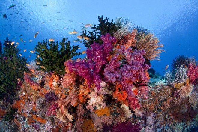 raja reefs