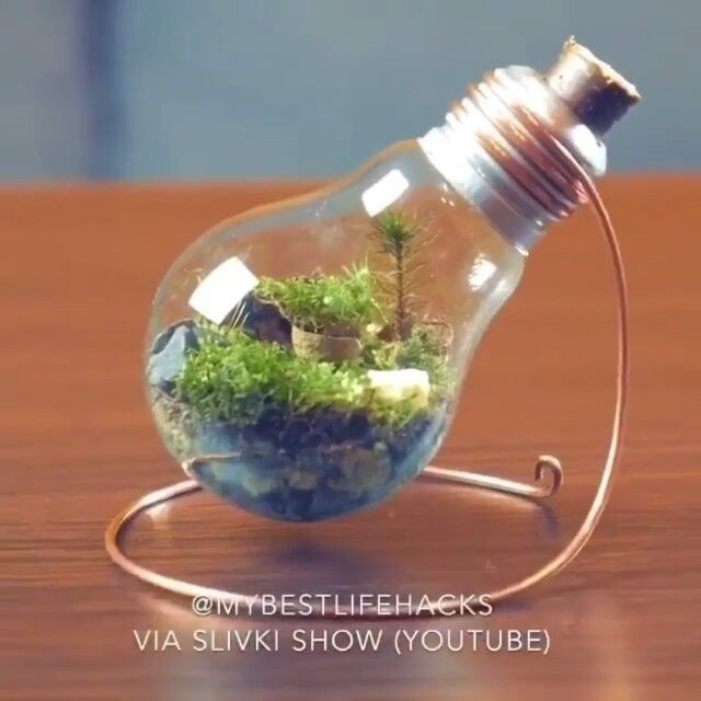 Follow @discover_paradise_earth (me) for more!  How to make an eternal terrarium  Tag your friends here  Vid by: Slivki Show En (YT) #terrarium #beautiful #wonderful #cool #socool