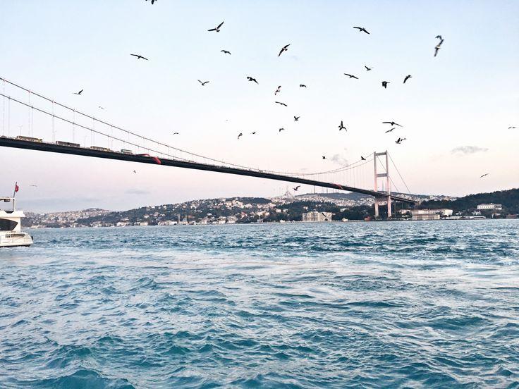 I S T A N B U L #istanbul #city #blue #birds