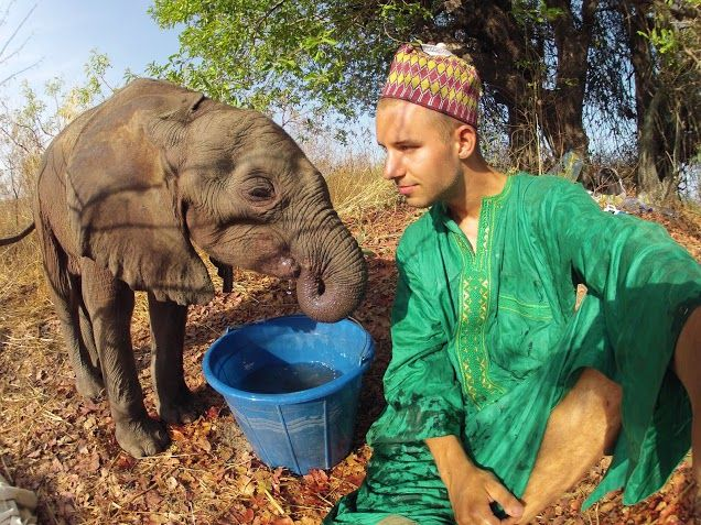 Saved baby elephant Max