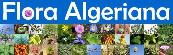 ALGERIA FLORA | faune et flore de l algérie wikipédia la flore et la faune d ...
