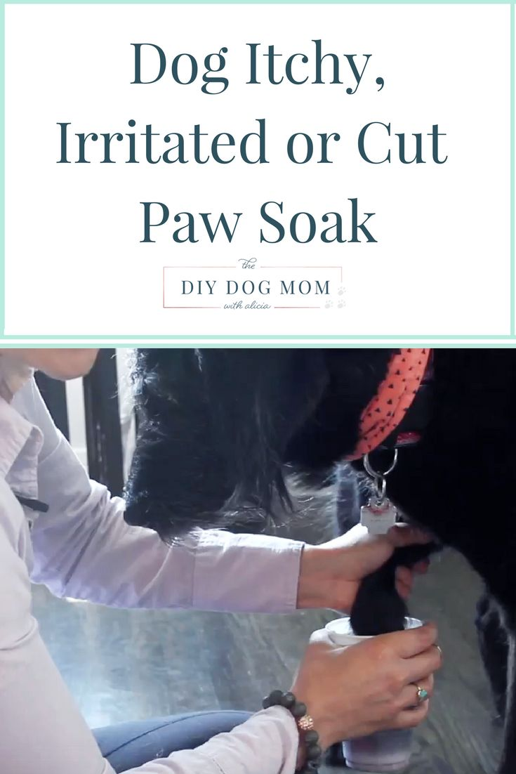I use this paw soak anytime one of my dogs has an irritated, itchy, inflamed paw or a cut paw pad. It is super simple and you only need two things: warm water and betadine. You can purchase betadine at any local grocery store or pharmacy. This is a great remedy for dogs who have a paw yeast infection or if your dog is chewing their paw because of allergies. I explain how I do the soak and the benefits in a quick video, check it out below!