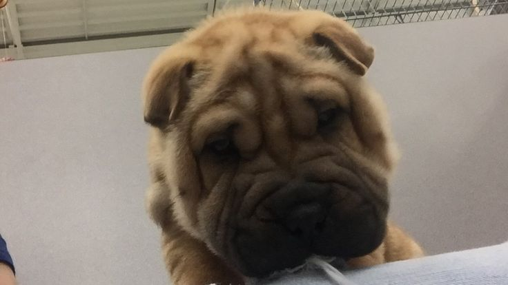 Fight Puppy Abuse in Ohio - Shut Down the Petland on Bethel Road