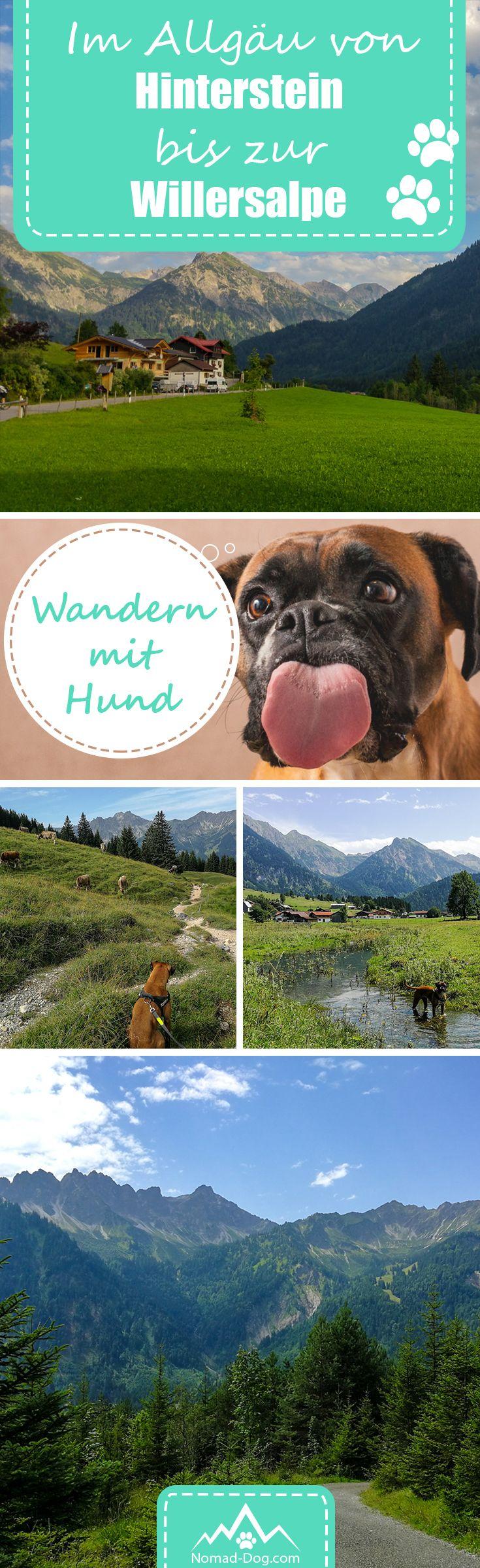 """Wandern im Allgäu mit deinem Hund? Wie wäre es mit einer Tour von Hinterstein zur Willersalpe inkl. GPS-Koordinaten zum direkt """"Nachwandern"""". #unterwegsmithund #travelwithdog #wandernmithund #urlaubmithund #wandern #outdoor #Allgäu"""