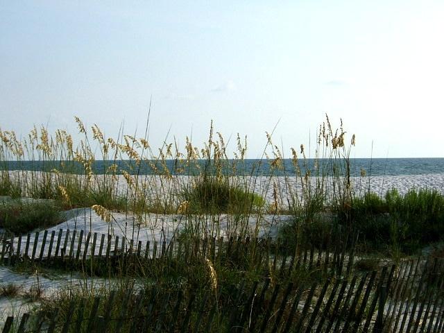 Mexico Beach Florida: Beaches, Florida Mexico, Vacation, Favorite Places Wanna, Destin Florida, Mexico Beach Florida, Florida Destin, Florida You