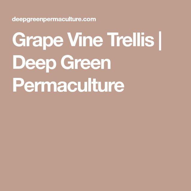 Grape Vine Trellis | Deep Green Permaculture