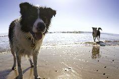 Hunde lieben es, am Strand herumzutollen. Doch oft sind Hunde am Strand nicht erlaubt. Die schönsten Hundestrände an der Nord- und Ostsee.