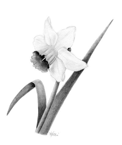 Tutorial: How to Draw a Daffodil