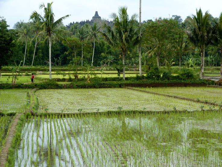 Jogjakarta-Quietness of Borobudur Temple from Padi field