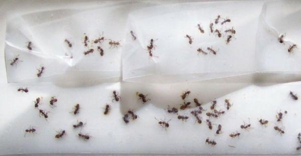 Ameisen garten haus hausmittel klebeband