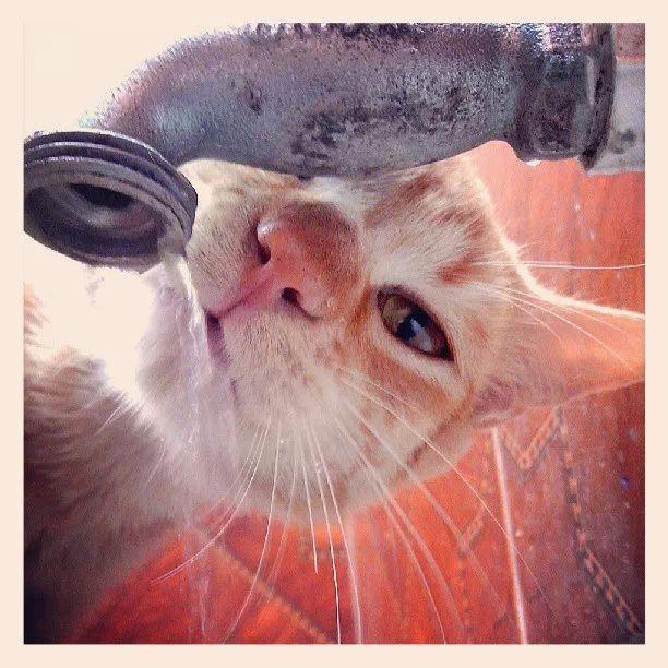 My cat: Nacho