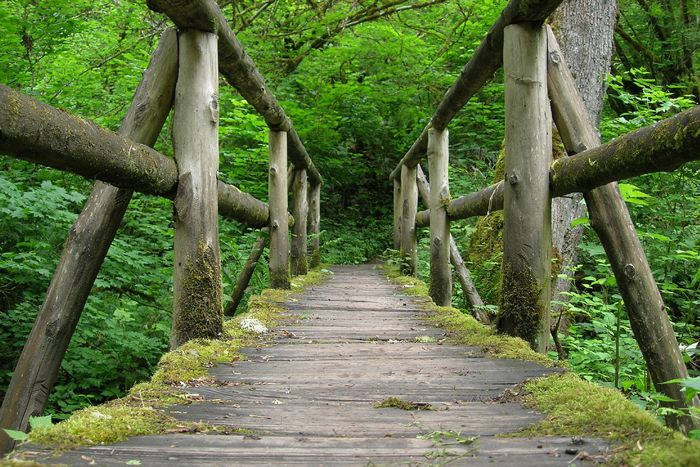 9 Amazing Strolls in Bellevue, Washington